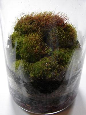 moss, terrarium